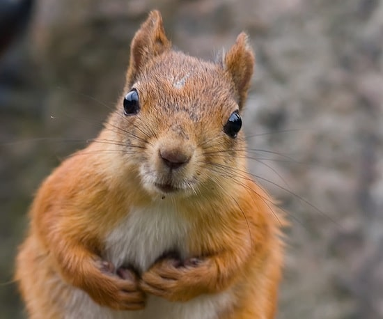 Marketing and Selling to Squirrels